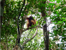 5 Days 4 Nights Wild Orang Utan Tracking